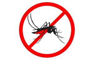 Komar– morderca. Choroby tropikalne przenoszone przez komary