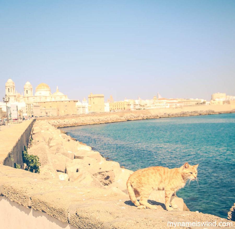 rudy kot i katedra w kadyksie